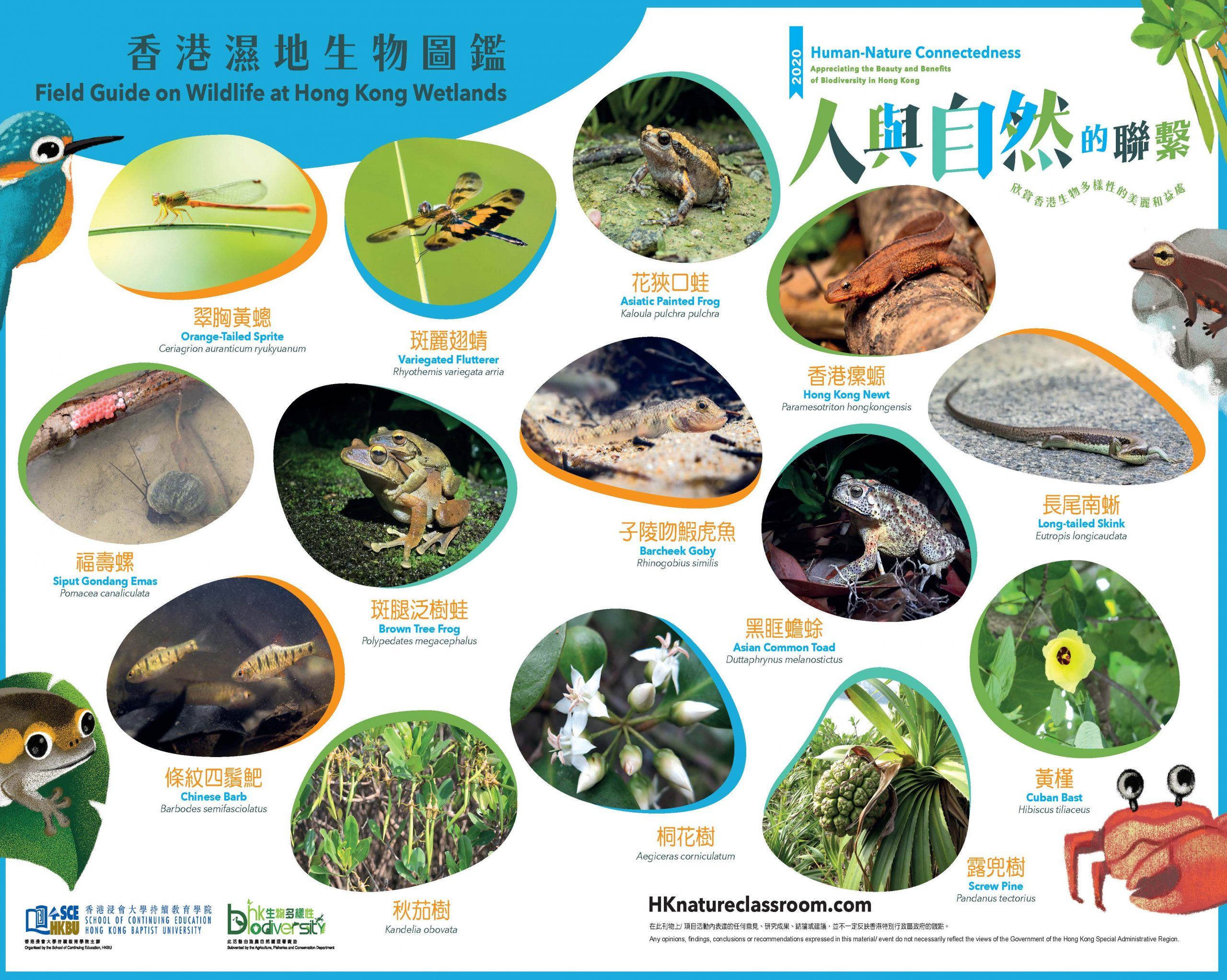 AFCD_A3PhotoGuide_Wetland_Page_2